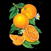 250144 Сироп PROFF Апельсин, 1 л.