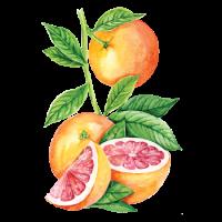 250236 Сироп PROFF Грейпфрут, 1 л.