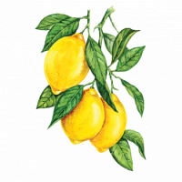 250458 Сироп PROFF Лимон, 1 л.