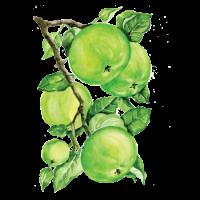 250113 Сироп PROFF Яблоко зеленое, 1 л.